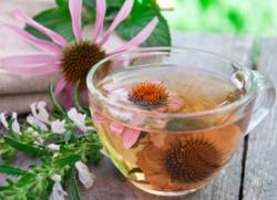 Эхинацея для иммунитета детям таблетки чай настойка эхинацеи детям