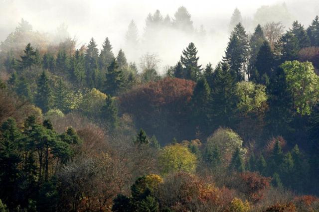 Леса в Швейцарии