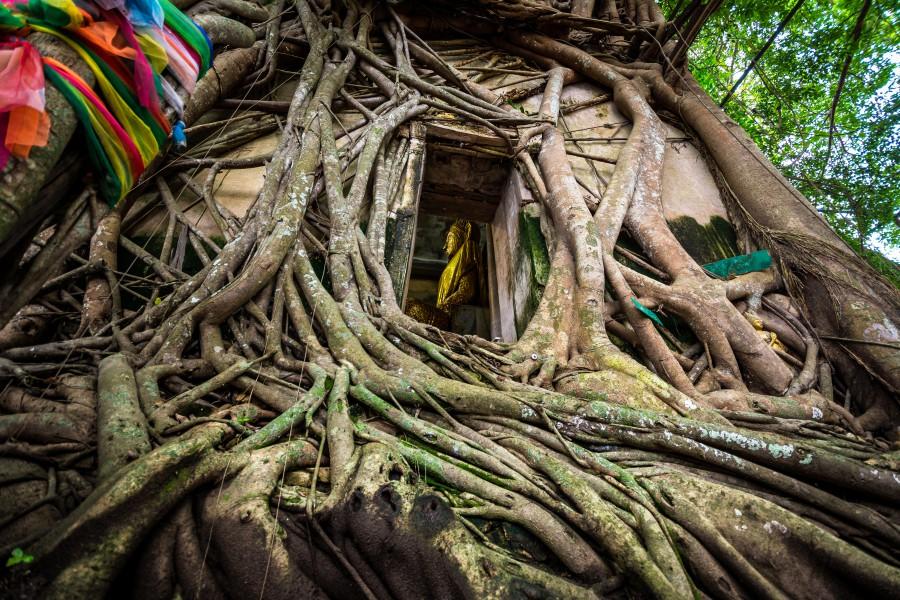 泰国树中庙