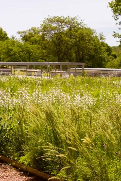 The Green Roof Garden is at is lushest in mid-June.