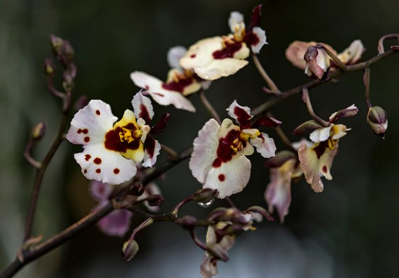 PHOTO: Orchids.