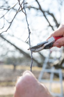 PHOTO: Closeup of pruning.