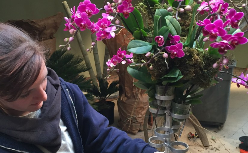 Behind the Scenes at the 2015 Orchid Show