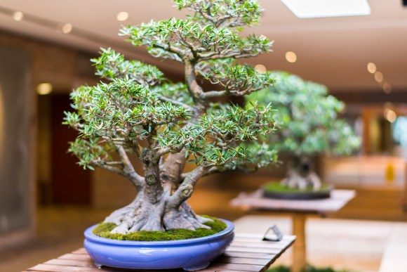 PHOTO: Bonsai 360-view.