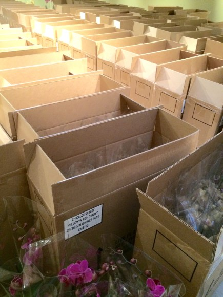 PHOTO: Boxes of orchids lined up for unpacking.