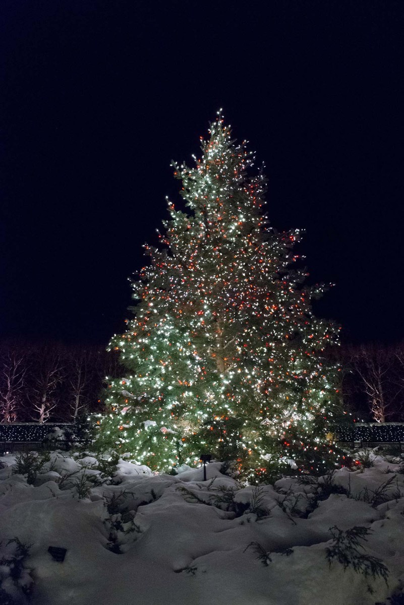 so you want to buy a christmas tree my chicago botanic garden - Christmas Tree In Chicago