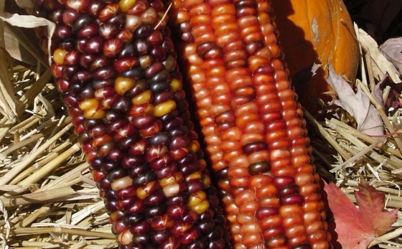 Wearable Indian Corn