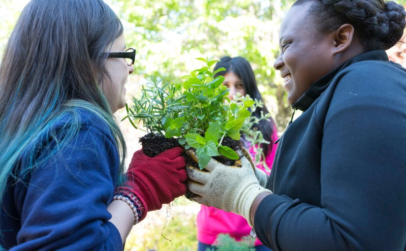 Summer Fun with Horticultural Therapy