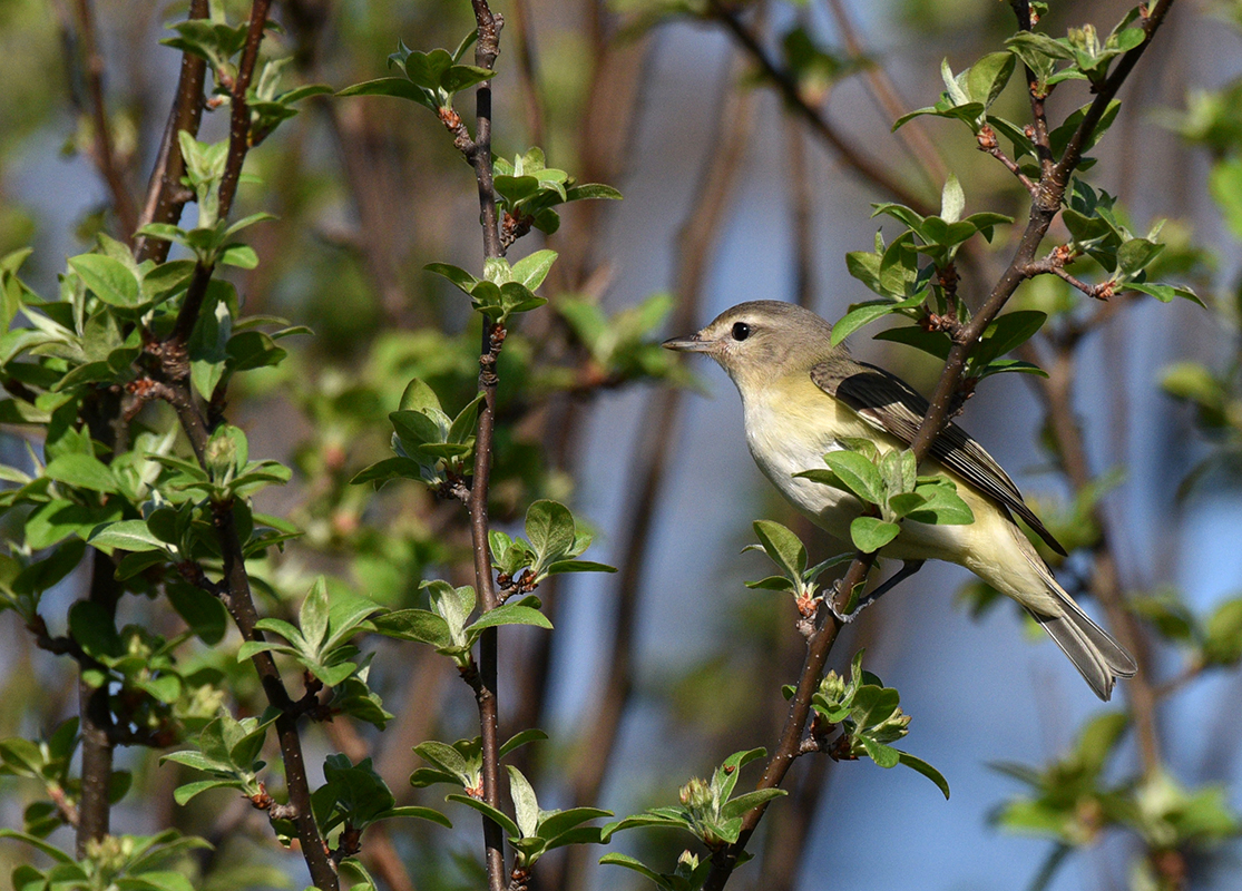 Birding | Chicago Botanic Garden