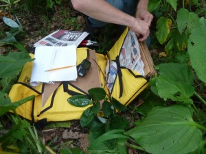 PHOTO: In Delhaas Woods, cuttings are labeled and pressed between pieces of cardboard for transportation to a herbarium for further processing and storage.