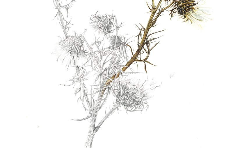 Drawn to Nature II