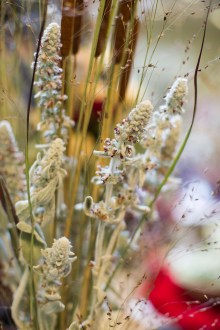 PHOTO: Dried plants and seedheads.