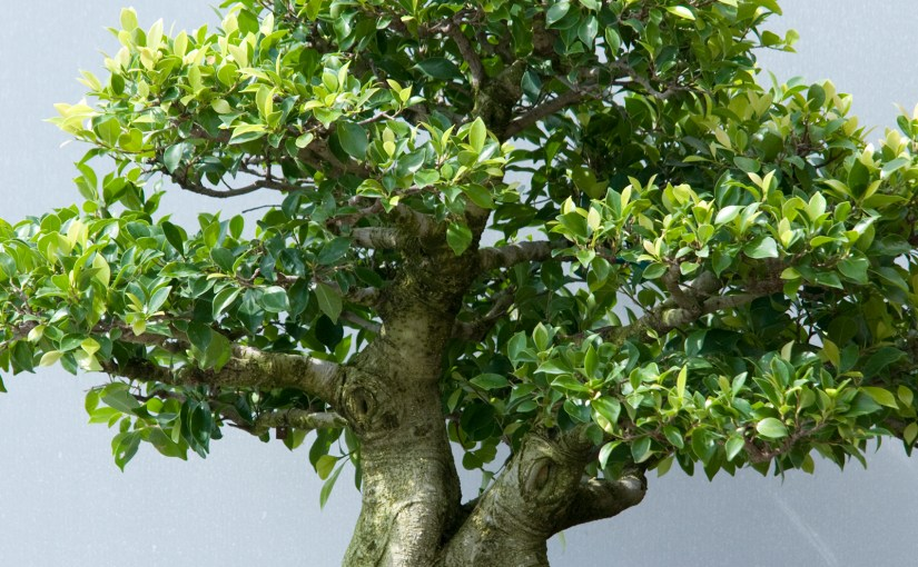 The Gift of Bonsai