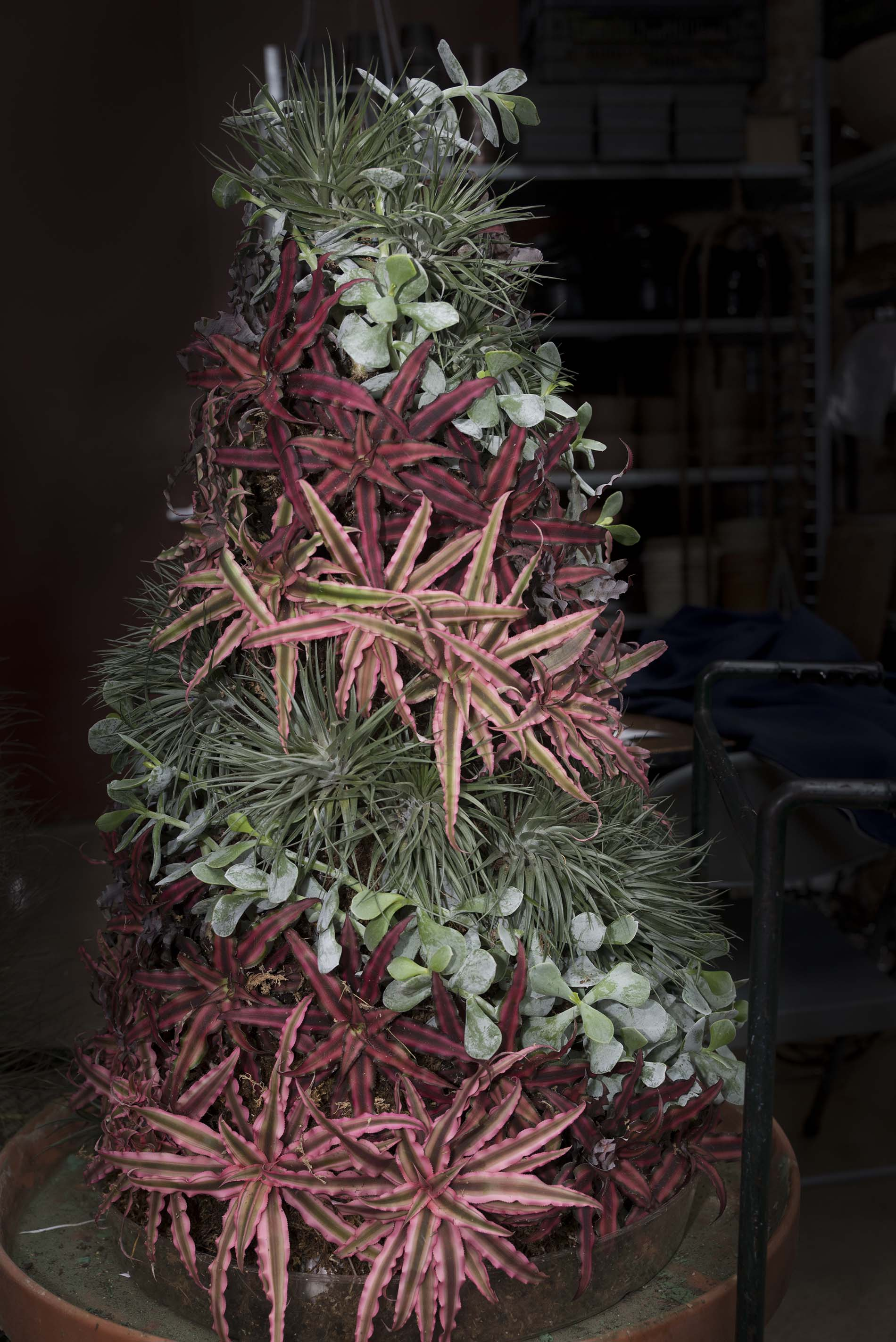 Making Topiary Trees for Wonderland Express – My Chicago ...