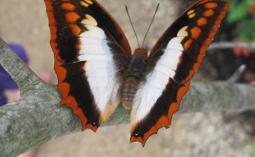 Speaking of Lepidoptera: Understanding butterfly vocabulary