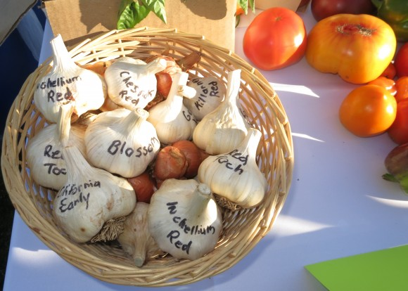 PHOTO: A basket of garlic, with each bulb labeled with its cultivar name.