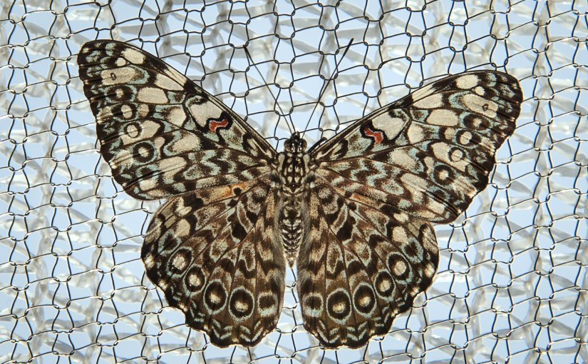 The Superpowers of Butterflies: Ultraviolet Communication