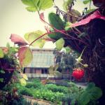 Hanging strawberry basket closeup