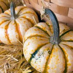 PHOTO: Heirloom pumpkins.