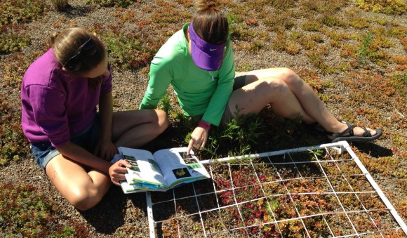 PHOTO: Ksiazek and an undergraduate student identify green roof plants.