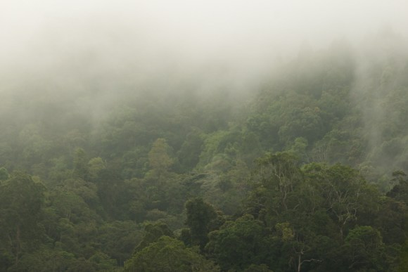 PHOTO: Kerinci Seblat National Park, Sumatra, Indonesia. Photo by Luke Mackin.
