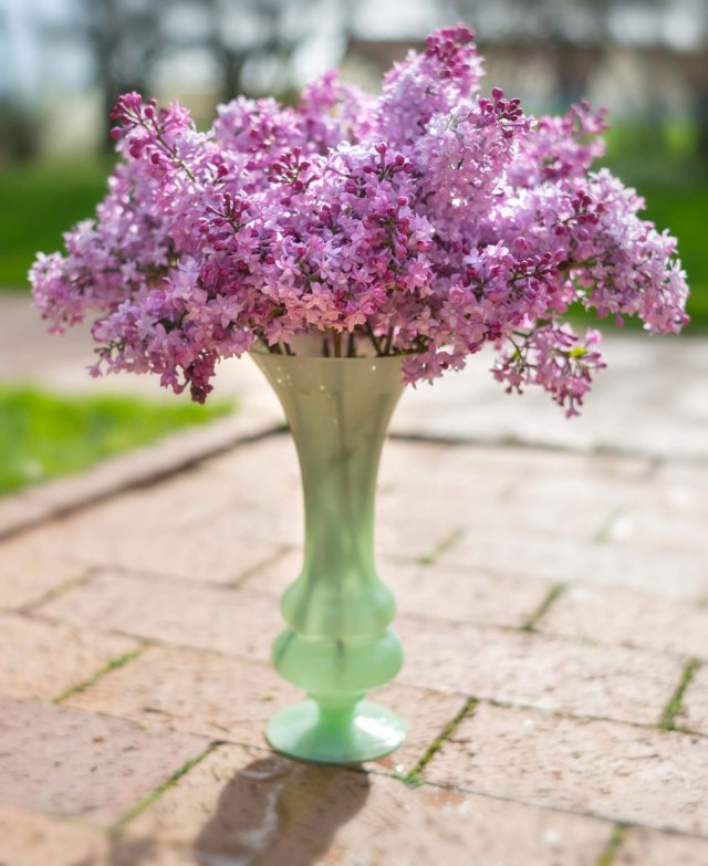 Keep Cut Lilacs Fresh Longer With These Tips My Chicago Botanic Garden