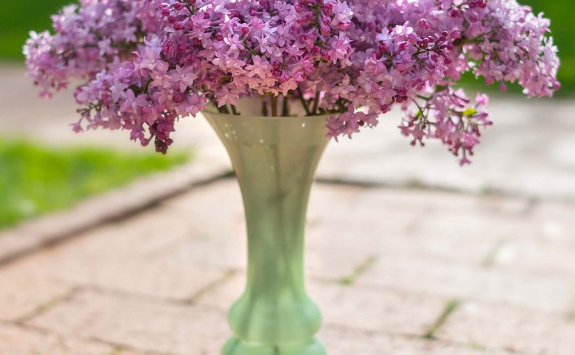 An arrangement of fragrant Evangeline hyacinth lilac (Syringa xhyacinthiflora 'Evangeline')