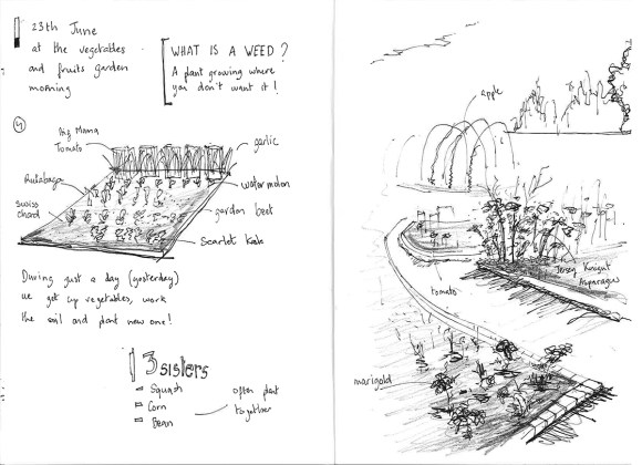 PHOTO: Lisa Ho's sketchbook illustrations and notes on plantings in the vegetable beds.