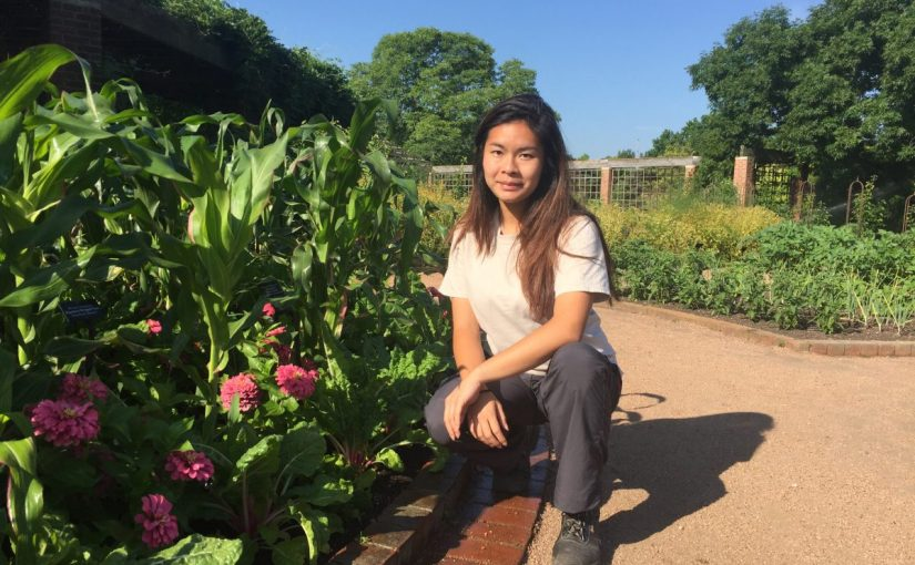 PHOTO: Intern and author Lisa Ho in the Regenstein Fruit & Vegetable Garden.