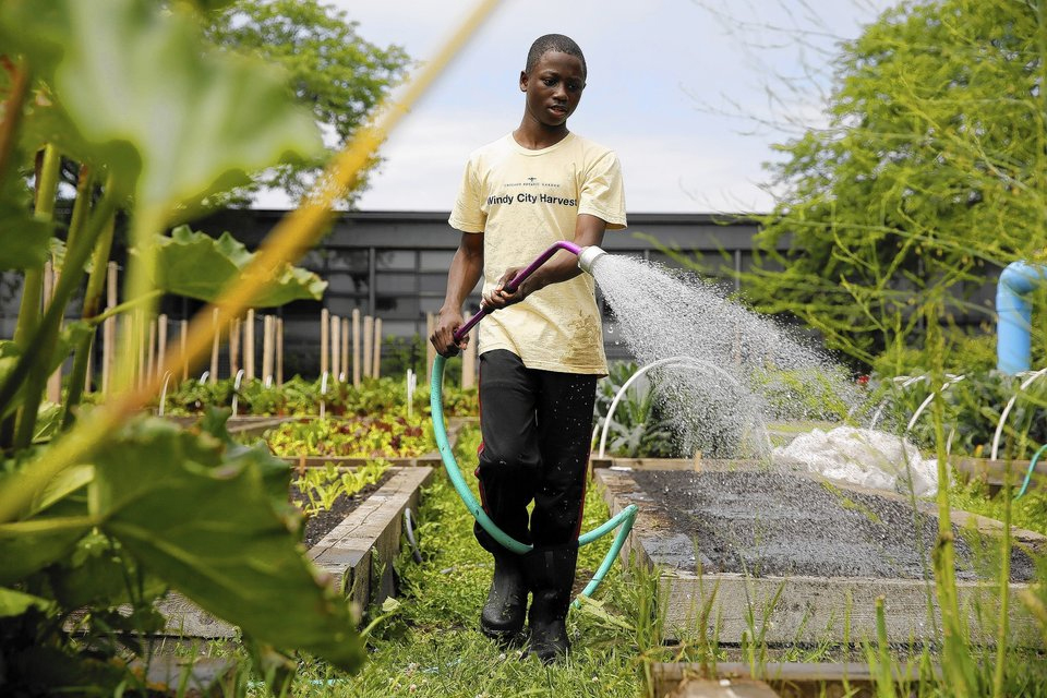 Delicieux PHOTO: Windy City Harvest Youth Farm Teen Waters In The Garden.