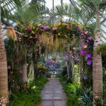 Orchid archway at the Chicago Botanic Garden's 2017 Orchid Show