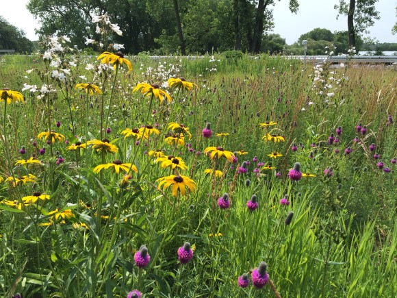 PHOTO: PCSC green roof in summer 2015.