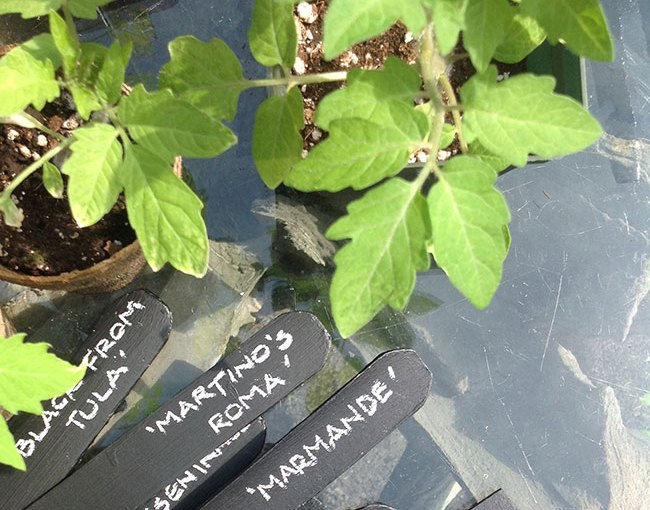 Best. Plant labels. Ever.