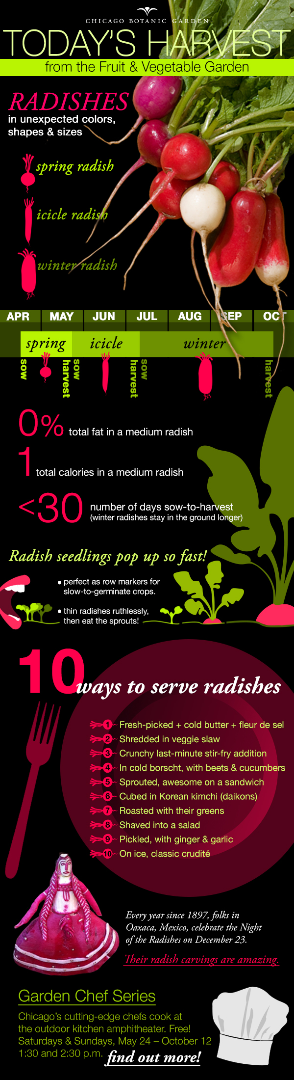 DIAGRAM: Infographic of radish cultivation, harvest, and dining facts.