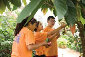 PHOTO: Orange-shirted middle schoolers examine palm trees and take data in the greenhouse.