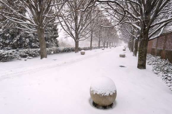 PHOTO: Linden Allee in winter.