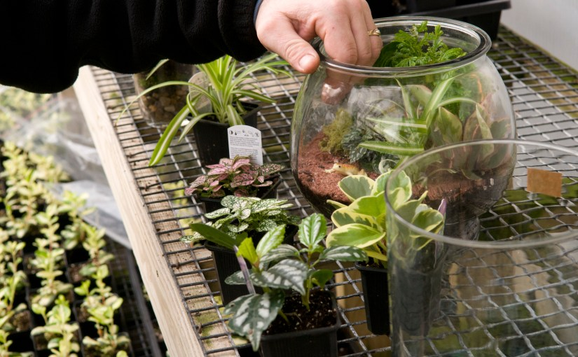 How to Plant a Glass Jar Terrarium