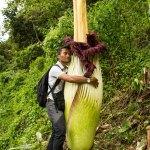 PHOTO: Man hugging titan arum. Photo by Luke Mackin.
