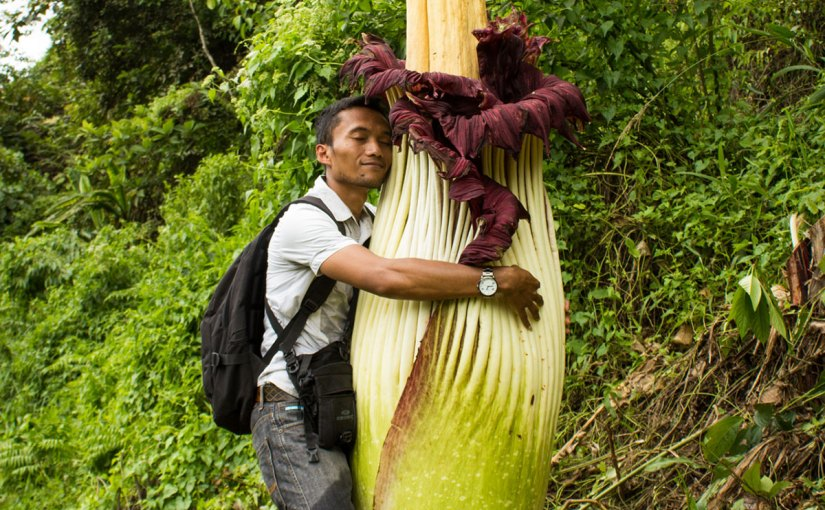 PHOTO: Man hugging titan arum. Photo by Luke Mackin.