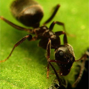 Ants, trees, soil, and more: REU presentations conclude summer of science
