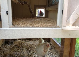 PHOTO: chicken coop