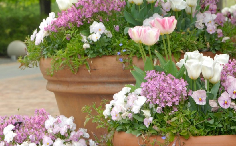 Create Your Own Horticultural Therapy Containers at Home