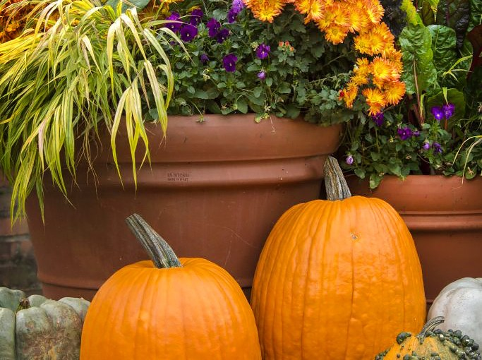 Tips for Your Fall Container Gardens