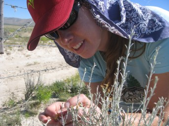 PHOTO: Dr. Williams hand-pollinating a specimen.