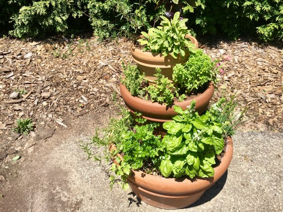 Lisa Hilgenberg's towering herb container.