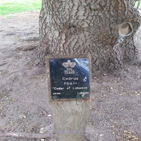 This label is mounted on a post at Royal Kew Gardens, London, England.