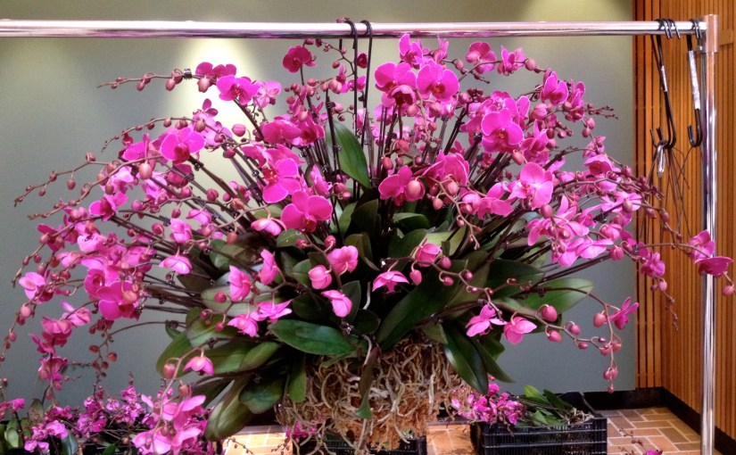 How to Build an Orchid Sphere