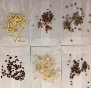 Seeds of potential native winners from the Colorado Plateau.