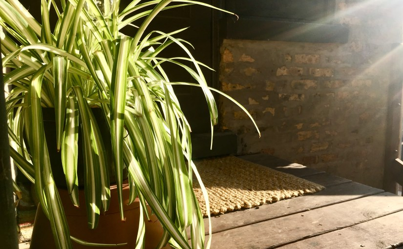 Time to Take Your Urban Houseplants Outside