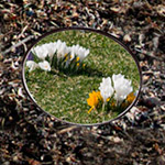 PHOTO: Springvision